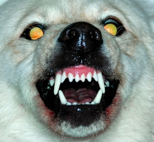 viirused näitavad hambaid