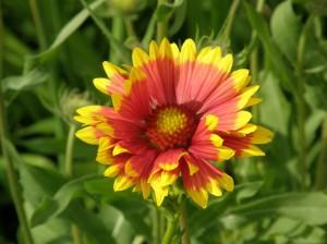 lilled kingituseks