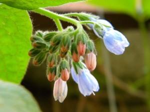 lillel pungad puhkemas