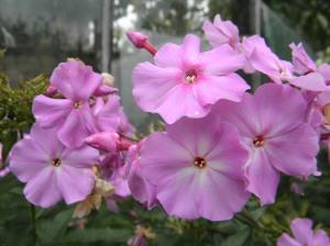 taustapildid lillepildid