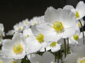 lillepildid looduse pildid