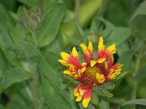 lill looduses