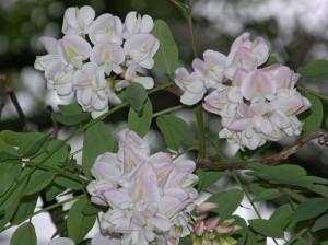fotod lilledest