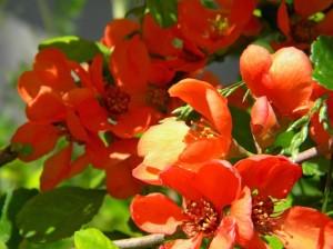 imelised lilled just sulle kingituseks