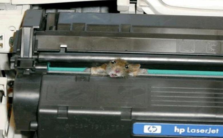 naljapilt hiirest