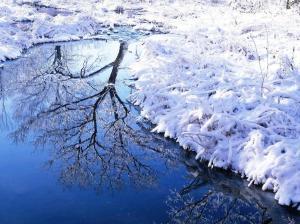 jõgi ja puu
