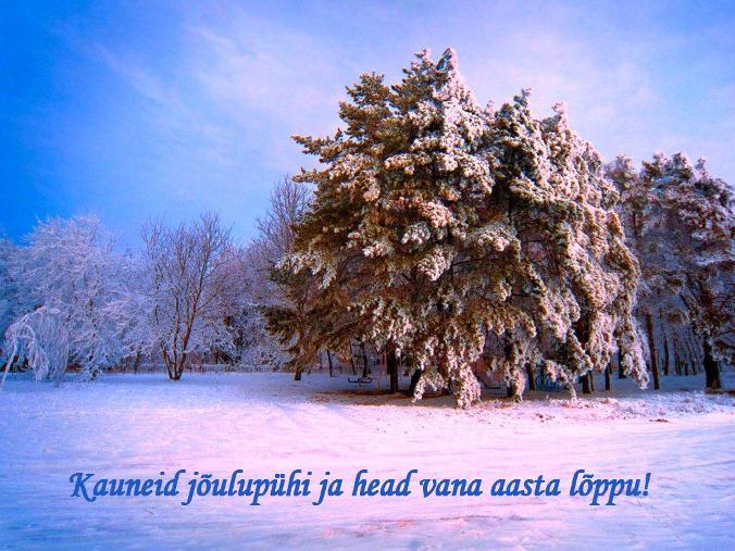 Taustapildid talvest, talvisest loodusest ja imelisest jõuluajast (3/6)