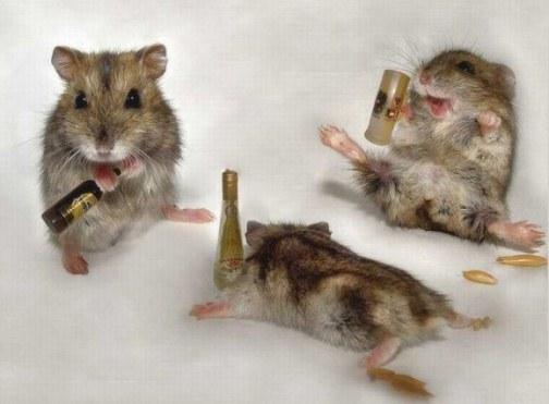 hiired pidutsevad