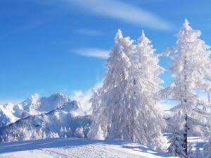 lumeehteid kuusepuud