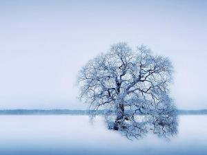 üksik puu