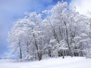 pilte talvest