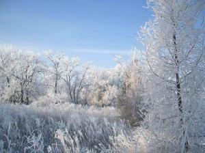 loodus talvel
