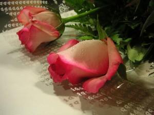 Punased roosid kui valentinipäeva sümbol