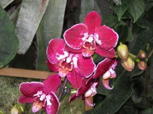 lilled botaanikaaiast
