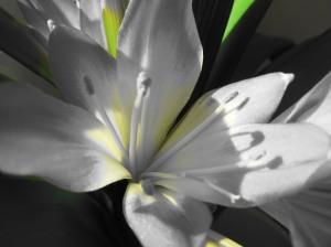 lilled taustapildiks