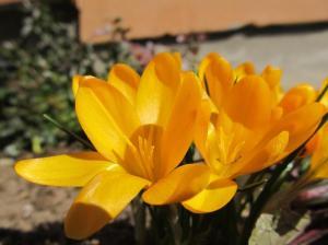 imelised aialilled