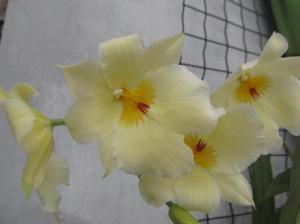 kaunitarid lilleaias