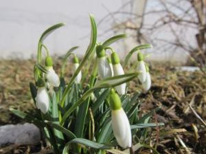 imeline kevade algus