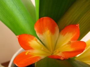lill pastelsetes toonides