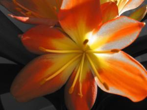 puhkenud lill