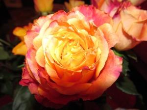 roosid armastuse sümbol