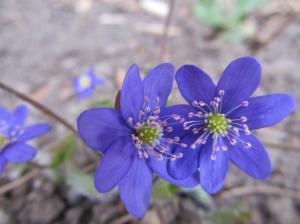 lilled metsas