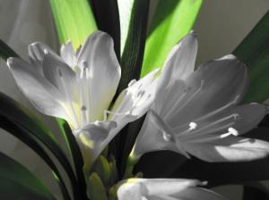 taustapildid lilledest