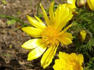 Lill on elu