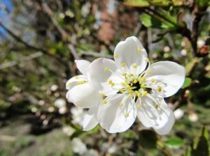 Õitsevad lilled
