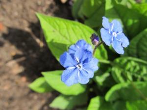 Suvi ja lilled