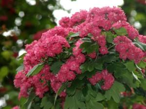 Tasuta taustapildid lilledest