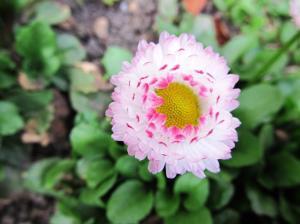 Lilled suvel õitsemas