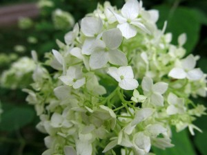 Exotic flowers from Estonia