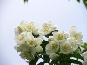 Flowers from Estonia