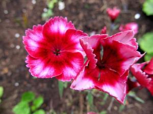 Armastus ja lilled