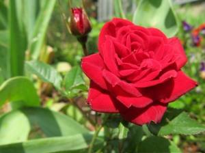 Lilled kõige kallimale