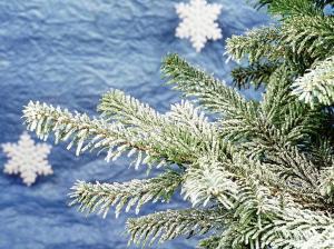 Lumehärmas jõuluoksad