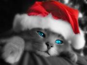 Jõuluvana kostüümis kiisu