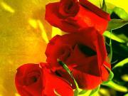 Armastus ja roosid