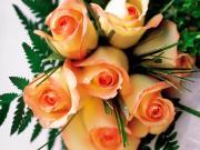Armastuse lilled