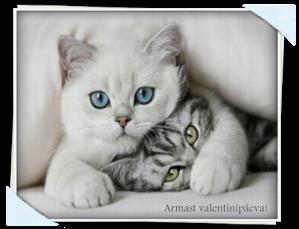 Valentinipäeva kaardid armsamale