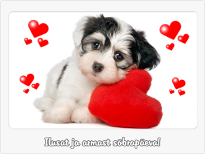 Valentinipäeva soovid